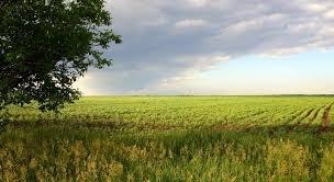 Недорогие земельные участки в подмосковье. Участки земли в подмосковье недорого Купить земельный участок в подмосковье недорого.